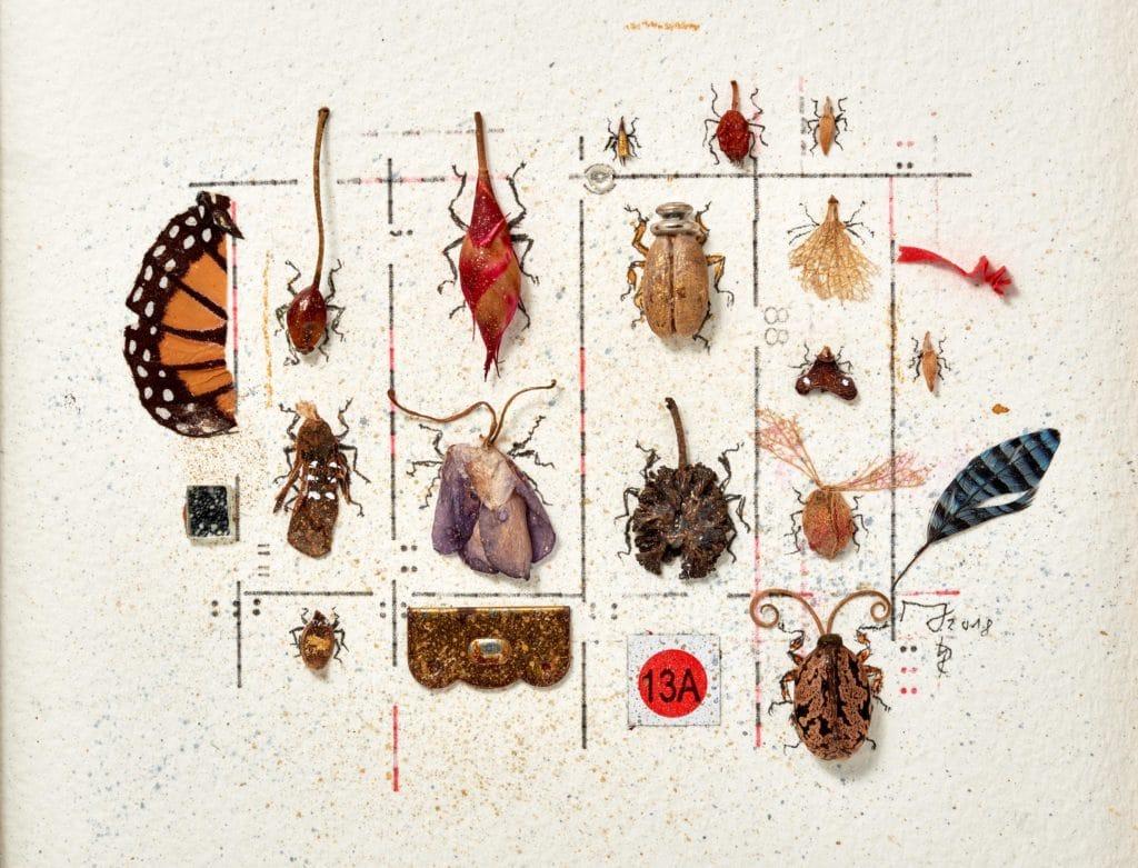 Vegane Insektensammlung